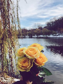 Roses, Yellow, Willow, Lake, Nature, Sky