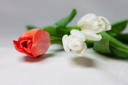 Flower, Tulip, Bouquet, Spring, Blossom