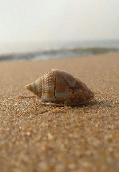 Seashell, Sand, Shell, Beach, Ocean, Water, Summer, Sea
