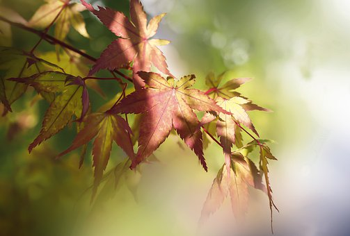 Leaf, Foliage, Bush, Tree, Nature, Spring, Texture