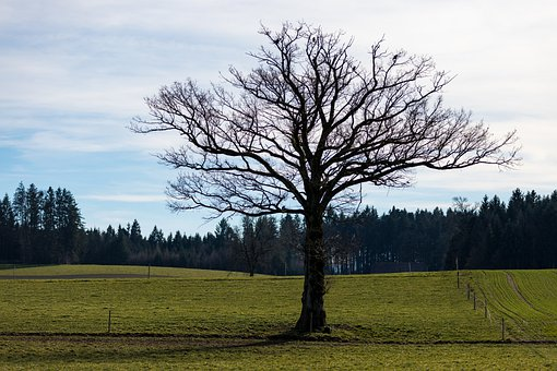 Tree, Individually, Landscape, Meadow, Nature, Lonely