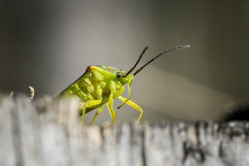 Portrait, Green, Bug, Stump, Wild, Forest, Animal