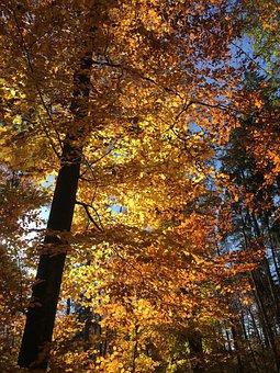 Autumn, Tree, Autumn Tree, Forest, Red, Gold, Beautiful
