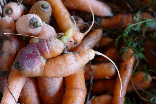 Root, Carrot, Distorted, Strange, Food