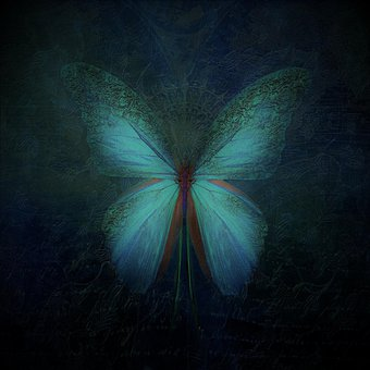 Farfalla, Butterfly, Colorata, Insect