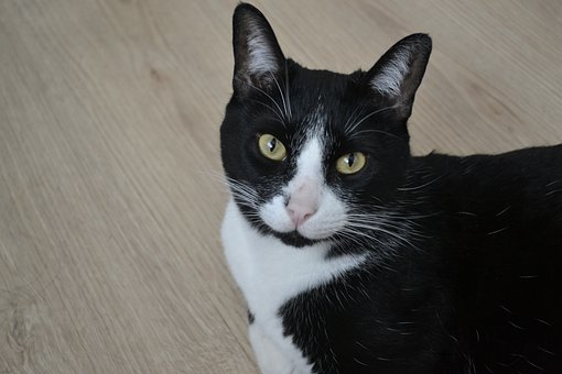 Minina, Cat, Feline, Pet, Kitten, Whiskers, Mammal