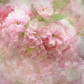 Nature, Landscape, Flower, Blossom, Bloom