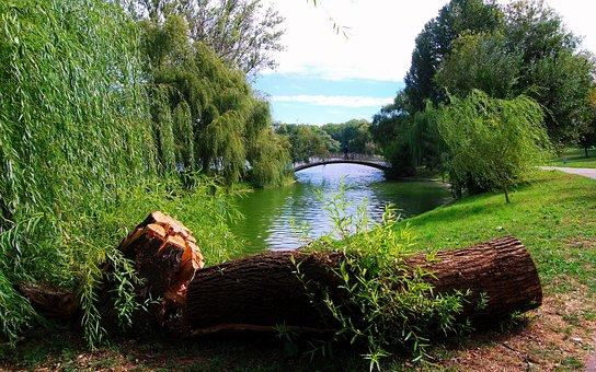 Landscape, Nature, Park, Summer, Green, Trees