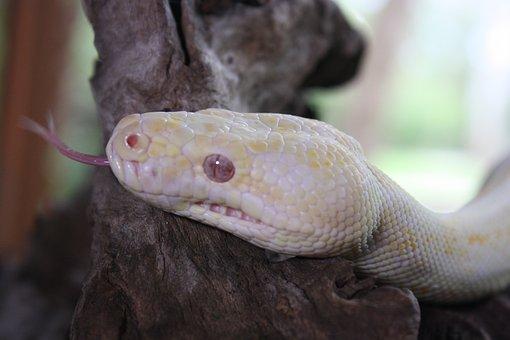 Snake, Lizard, Yellow, Reptile, Animal