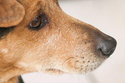 Dog, Hybrid, Mixed Breed Dog, Portrait, Pet, Animal