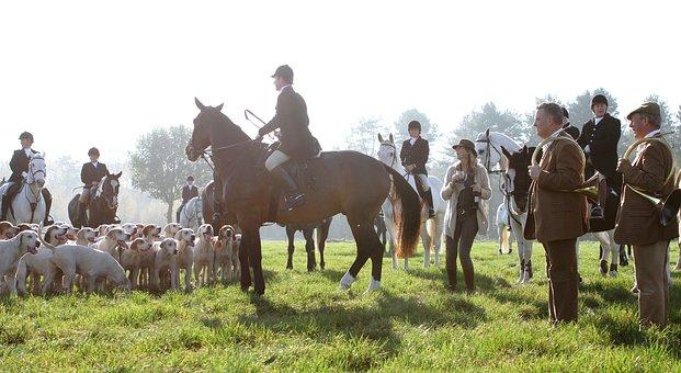 Drag, Horse, Rider, Fox, Animal, Men, Riders