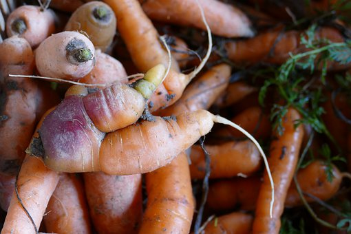 Root, Carrot, Distorted, Strange, Food, Power Supply