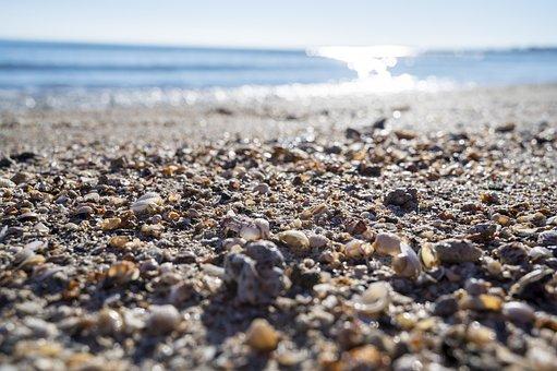 Shells, Sea, Beach, Sun, Holidays, Sand