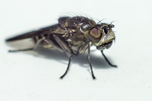 Portrait, Fly, Scary, Nature, Hair