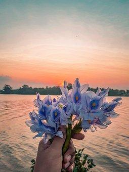Sunset, Flowers, Horizon, Lake, Sky, Clouds, Sunrise