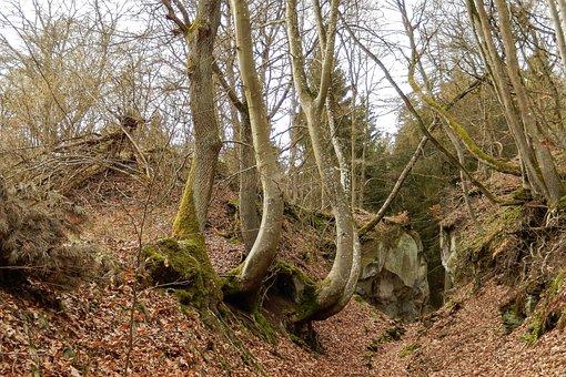 Eifel, Mendig, Trail, Hiking, Dream Road To Wood