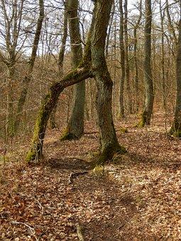 Eifel, Mendig, Trail, Four-mountains-way, Tree, Nature
