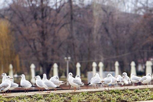 Birds, Seagulls, Plumage, White, Gray, Black, Sitting
