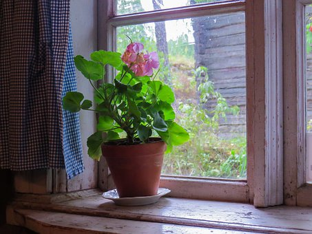 Window, Old, Flower, Summer, Plant