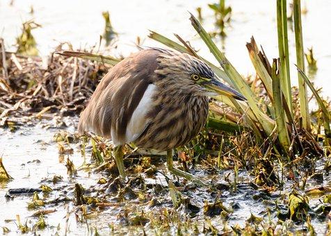 Bird Photography, Nature, Animal