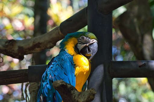 Parrot, Bird, Costa Rica, Zoo