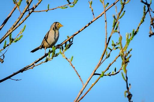 Nature Brilliance, Nature, Birds