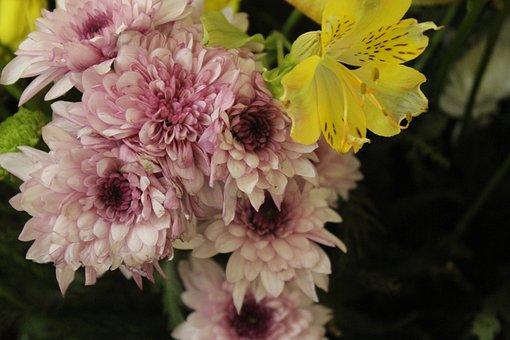 Purple, Flowers, Bloom, Blossom