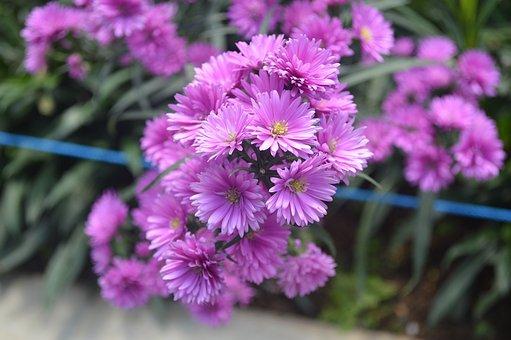 Purple, Flower, Love, Bloom, Nature