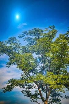 Blue, Sky, Cloud, Green, Leaves, Tree, Daylight
