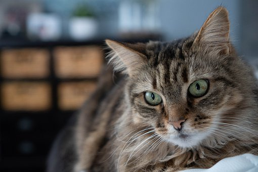 Cat, Kitty, Pet, Fur, Bokeh, Tabby
