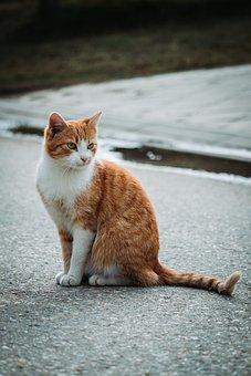 Cat, Stray, Animal, Homeless, Cute, Portrait, Mammal