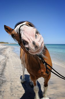 Horse, Smile, Clydesdale, Animal, Summer, Happy