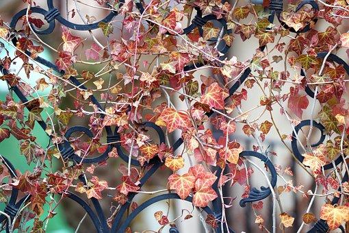 Plant, Decorative, Clip, Poison Ivy, Leaves, Colored