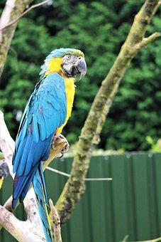 Parrot, Bird, Plumage, Faunapark, Flakkee, Colors