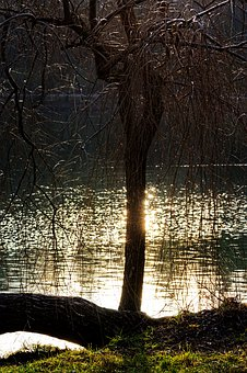 Tree, Willow, Nature, Winter, Lake, Sun, Reflections