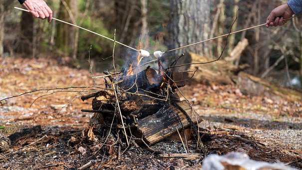 Campfire, Marshmallow, Smores, Fire, Flame, Camp, Woods