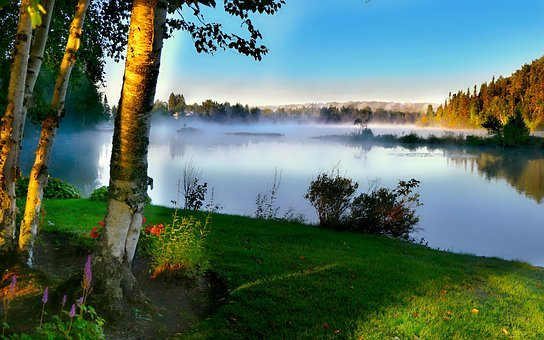 Landscape, Nature, Trees, Birch, Water