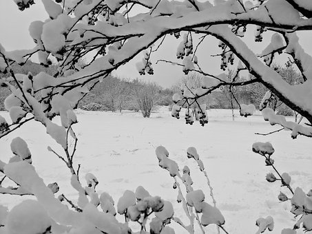 Winter, Forest, Snow, Trees, Nature, Cold, Wintry