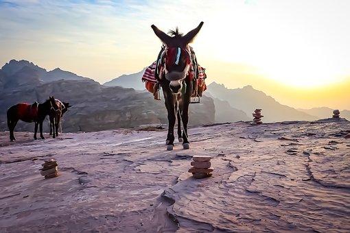 Donkey, Animal, Wildlife, Nature, Sunset, Dusk, Horse