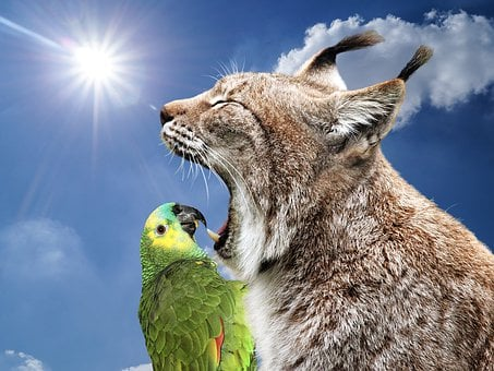Laugh, Funny, Animals, Funny Animals, Nature