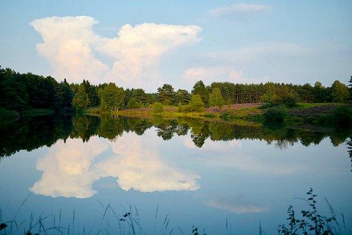 Lüneburg Heath, Nature Reserve, Heathland, Lower Saxony