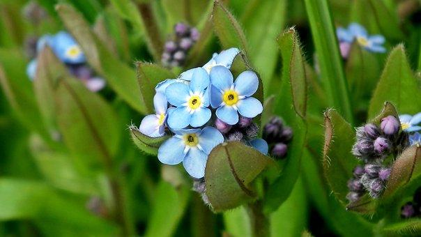 Nots, Little Flowers, Blue, Flourishing