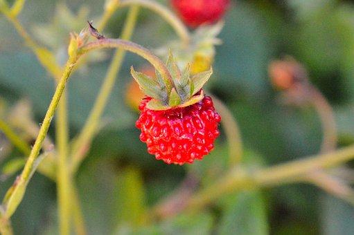 Raspberry, Bay, Fruit, Raspberries