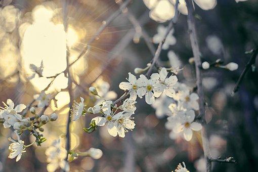 Flowers, Bush, Nature, Spring, Plants
