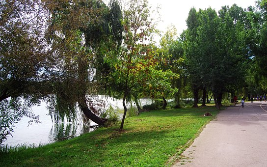 Landscape, Nature, Lake, Trees, Grass, Plants, Alley