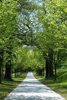 Avenue, Trees, Away, Walk, Nature