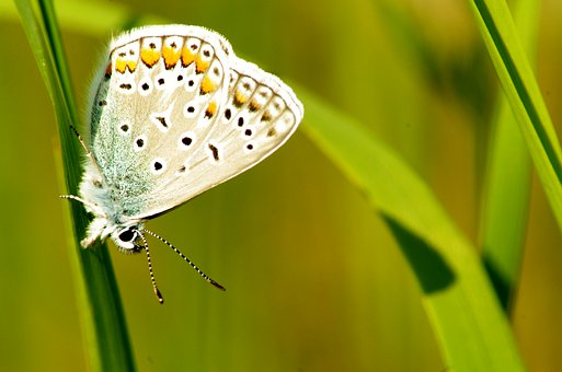 Nature, Wildlife, Butterfly, Macro, Insect, Close, Day