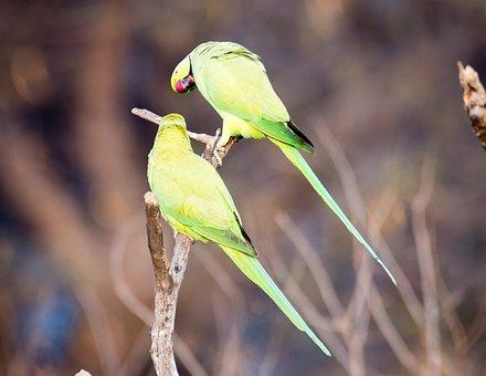 Parrot, Bird, Bird Photography, Wildlife