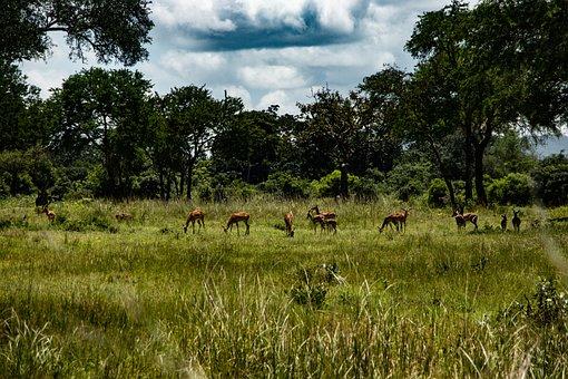 Safari, Africa, Tanzania, Wildlife