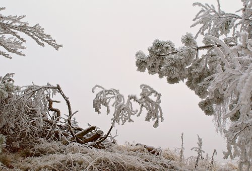 Hoarfrost, Frost, Winter, Frozen, Nature